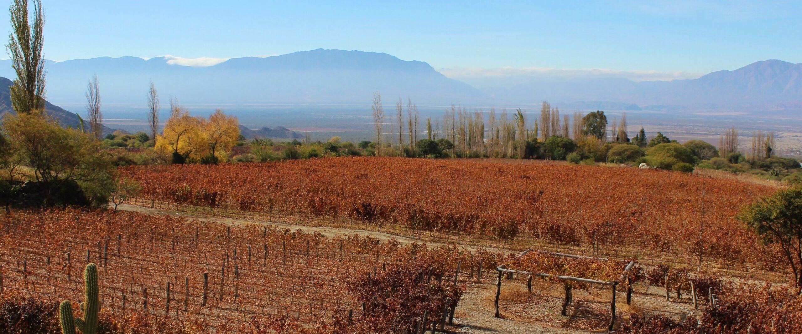 20 – Auf der Ruta del Vino im Valles Calchaquíes-Rebkulturen auf über 2000müM