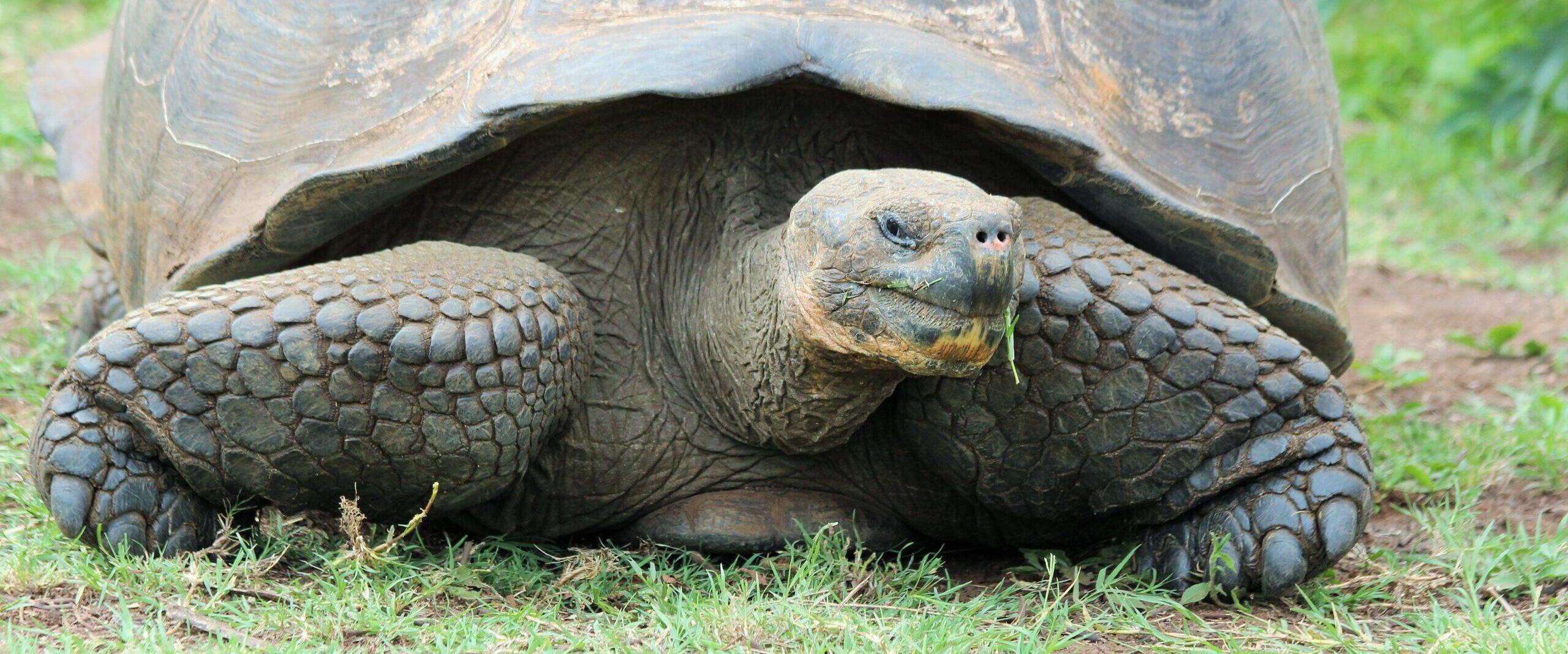 47 – Ecuador – Galapagos