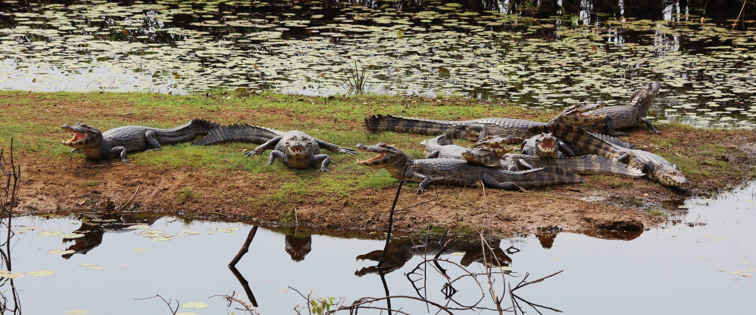27 – Pantanal – ein Gefühl wie im Zoo